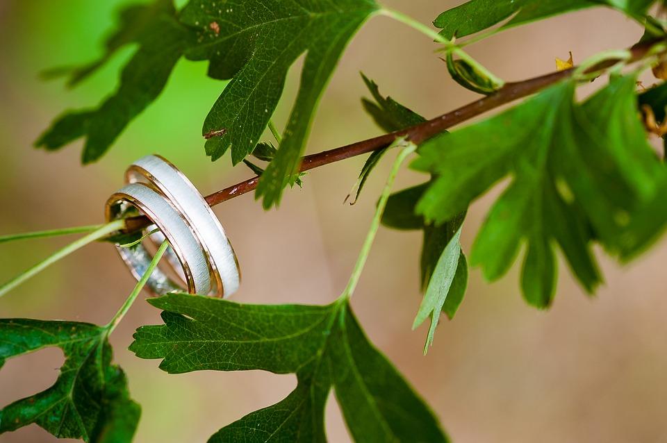 צילום של טבעות שצולמו על ענף במהלך צילום מגנטים לאירועים בהוד השרון במחירים זולים